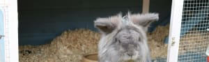 Adopt a Farm Animal £20 - Rabbit