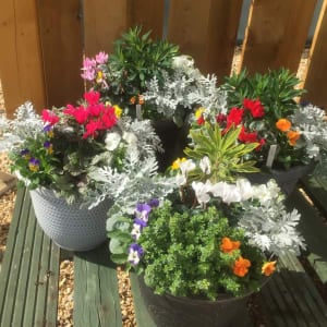 Winter selection ornamental pots