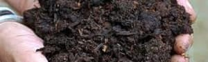 Compost - well-rotted horse manure in bags